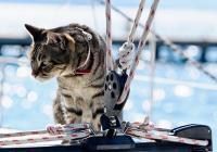 Sejle med kæledyr